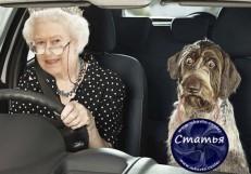 СОБАКА и Королева к статье удобно ли за рулем